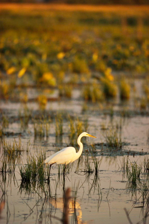 Things to Do in Ohio's Lake Erie Shore--Ottawa National Wildlife Refuge