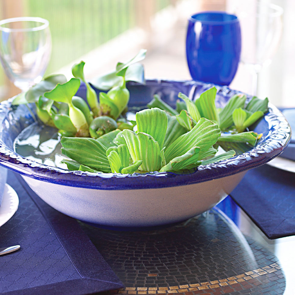 A bowl of water lettuce and water hyacinth is an easy table accent.