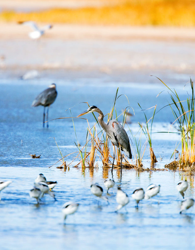 Quivira National Wildlife Refuge