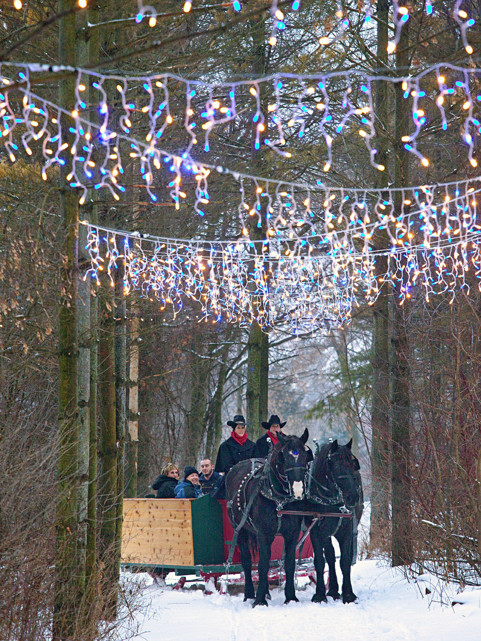 Dusk makes sleigh rides at Paradise Ranch near Cedarburg, Wisconsin, enchanting.