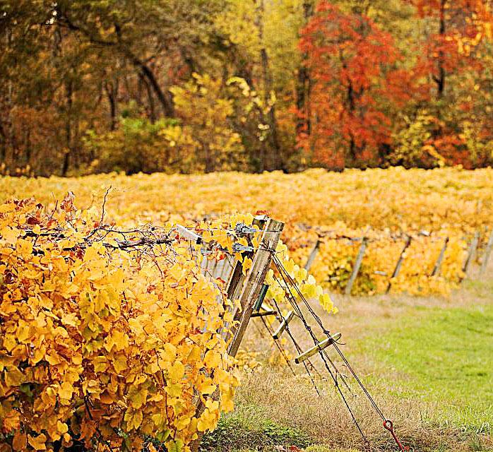Owl Creek Vineyard.