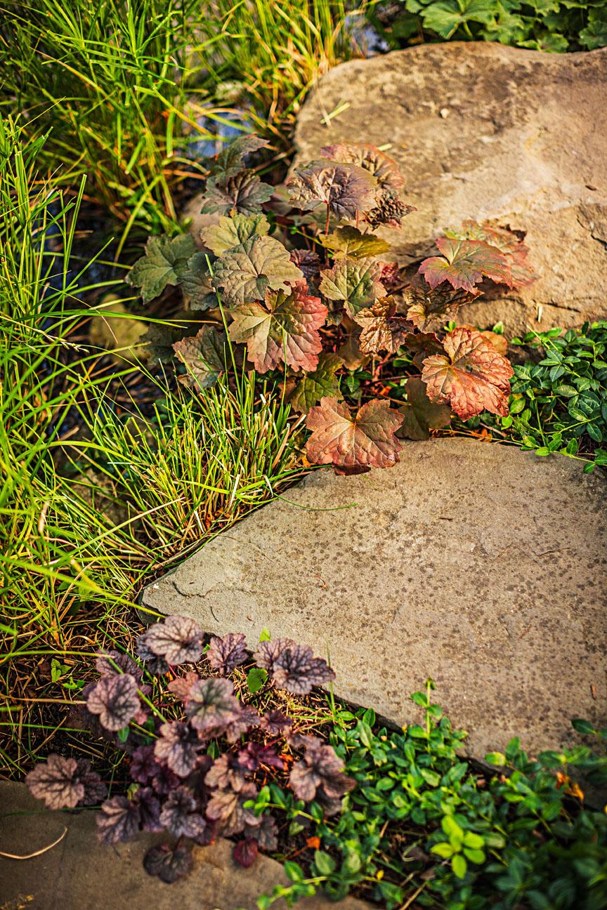 Garden Tour: Backyard Rain Garden | Midwest Living