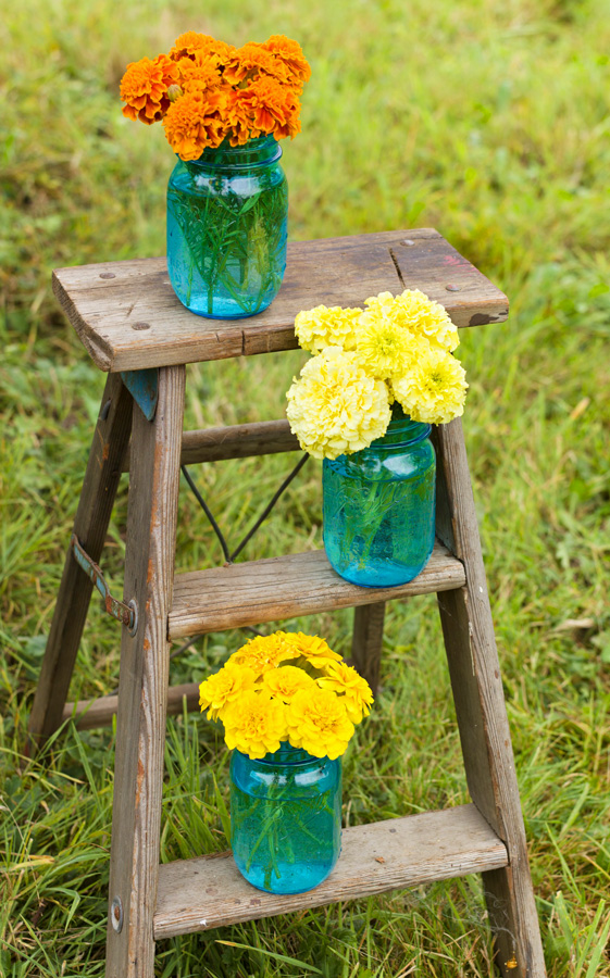 7 Gorgeous Ways To Show Off Your Marigolds Midwest Living