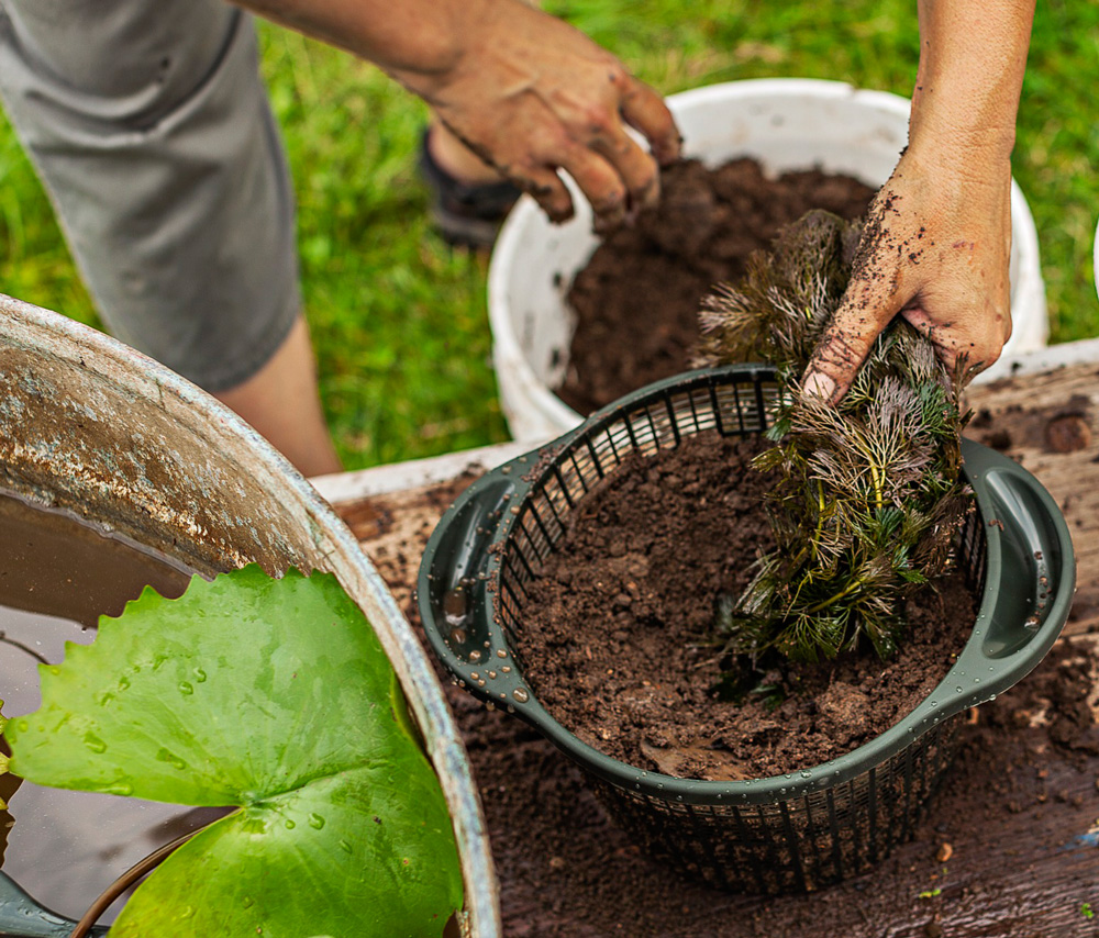 How to Plant a Water Container Garden | Midwest Living
