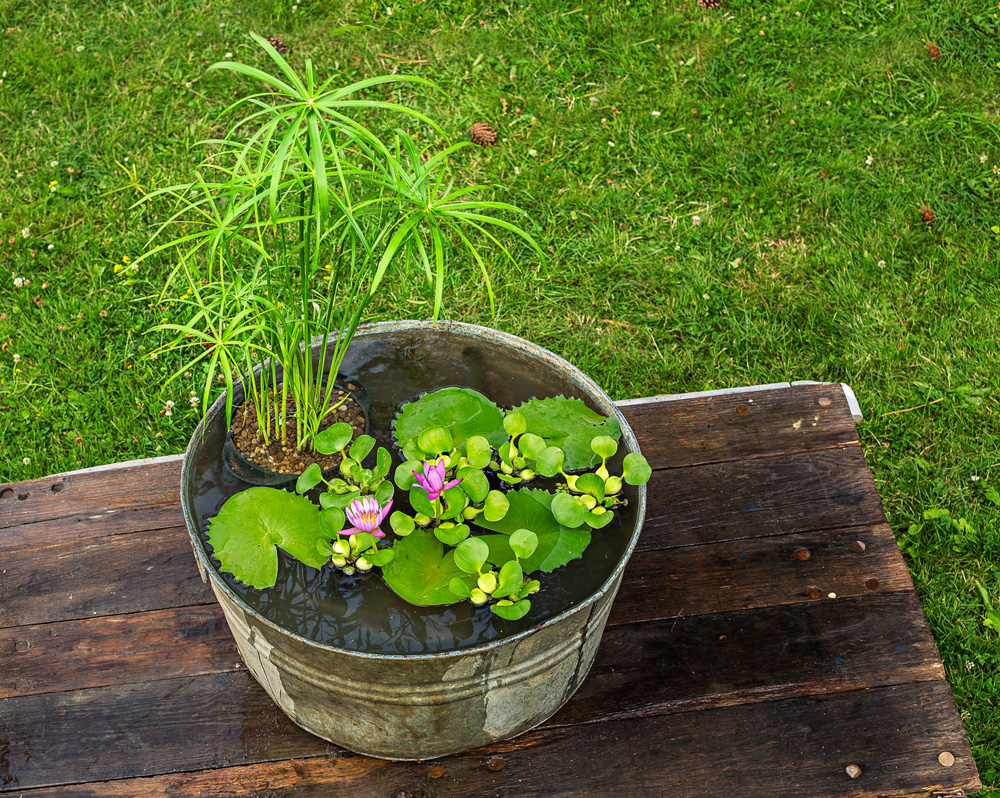 How to Plant a Water Container Garden Midwest Living