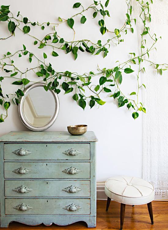 Buy mature plants