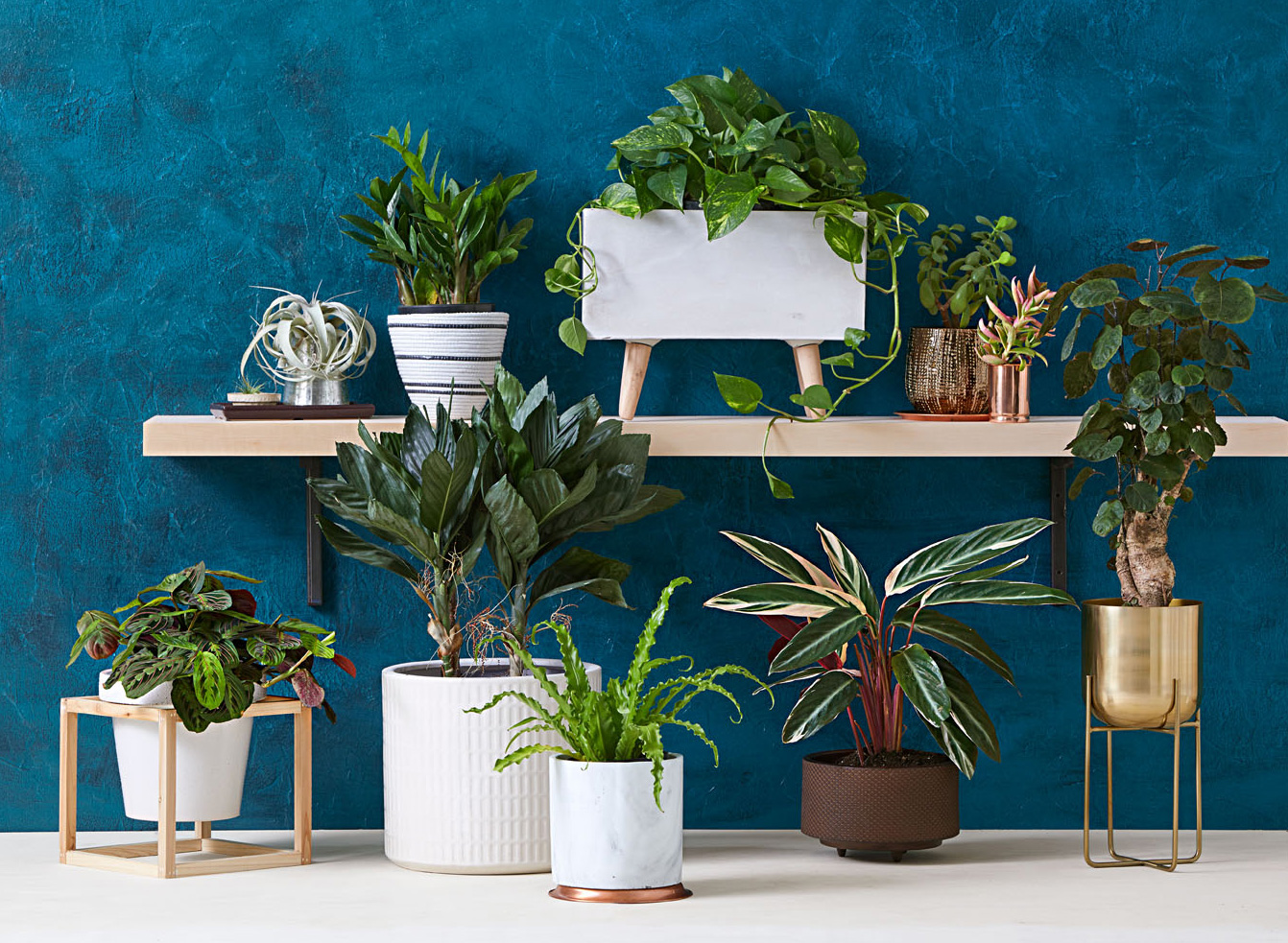 Stylish Houseplants