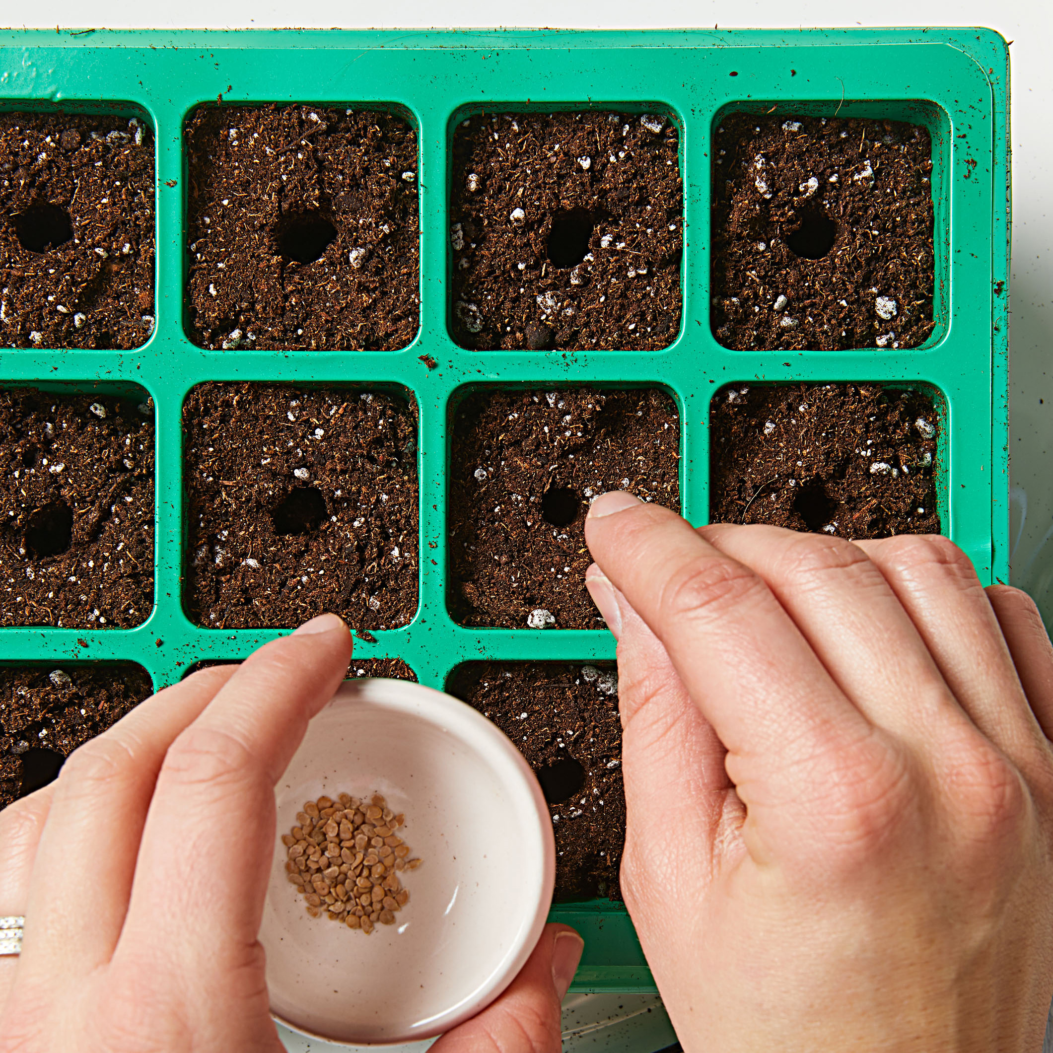 How to start seeds—Step 3
