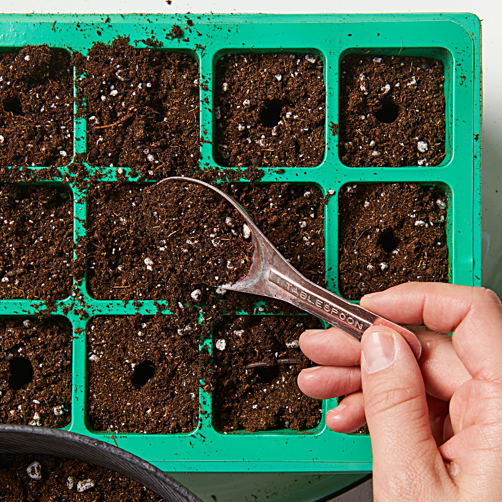 How to start seeds—Step 4