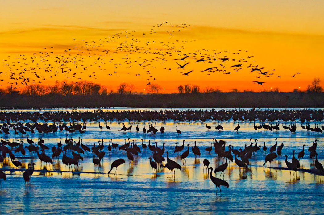 A Night With The Sandhill Cranes At The Crane Trust In >> March Of The Cranes In Nebraska Midwest Living