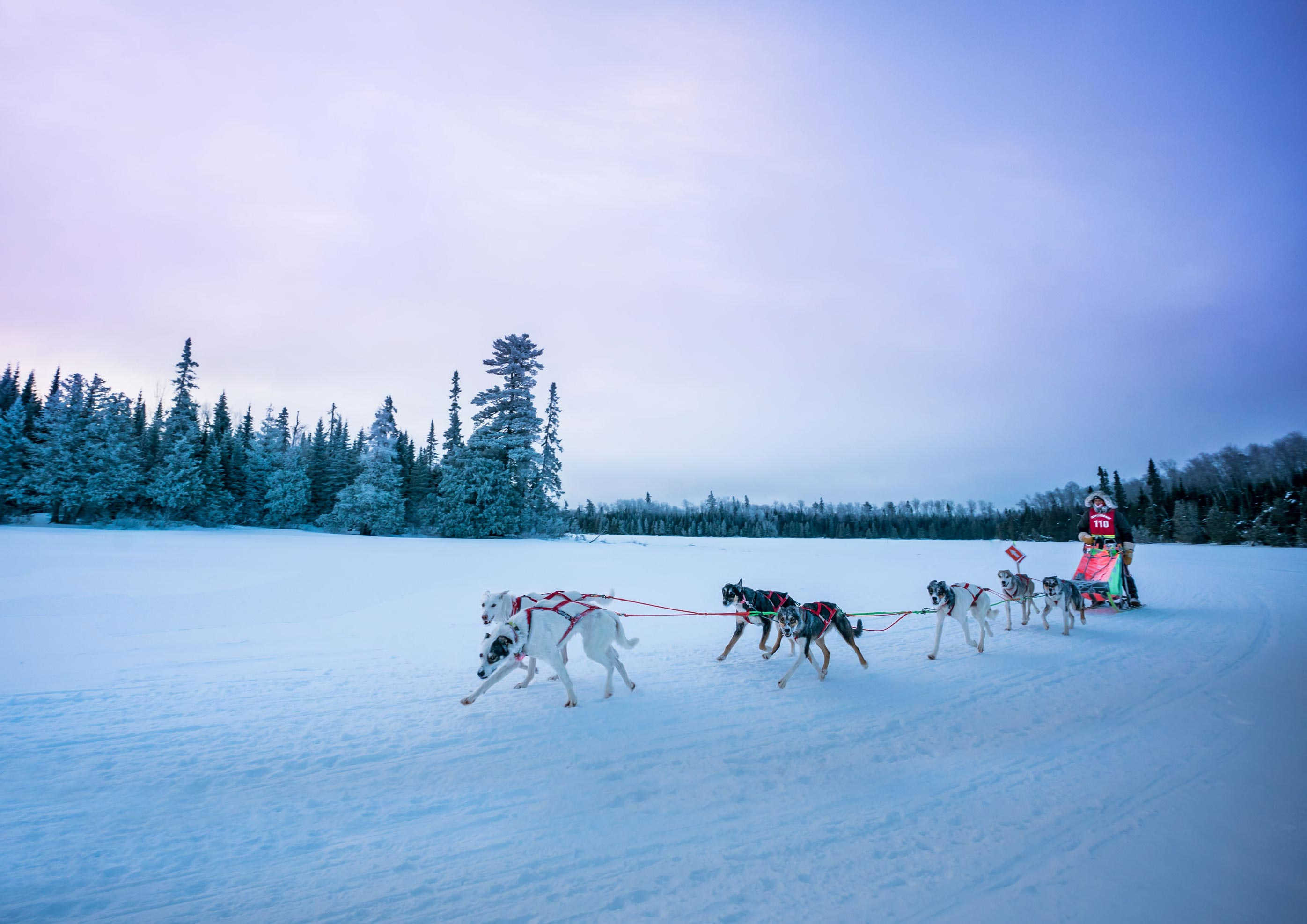 Beargrease race