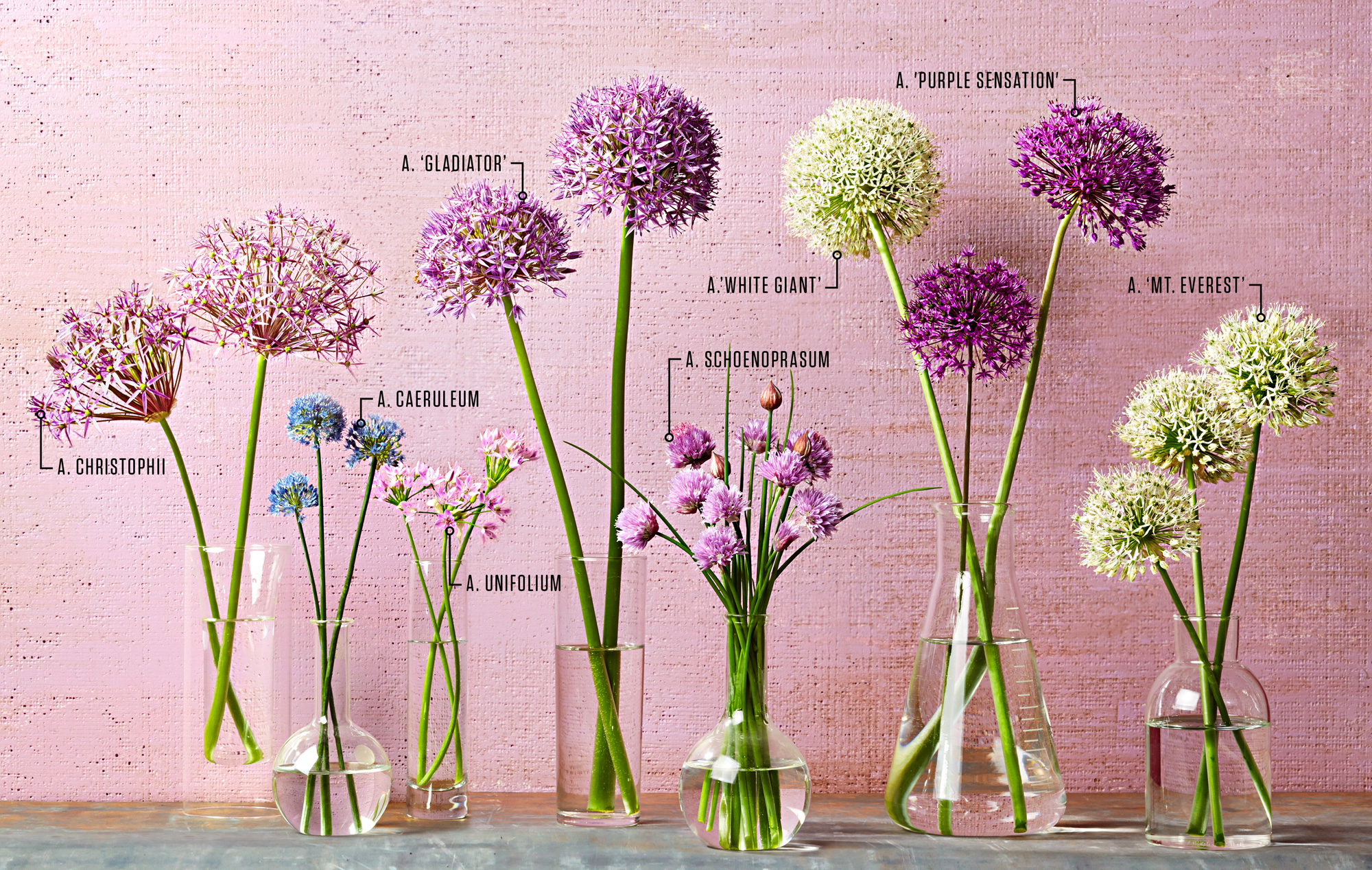Your Guide to Alliums | Midwest Living