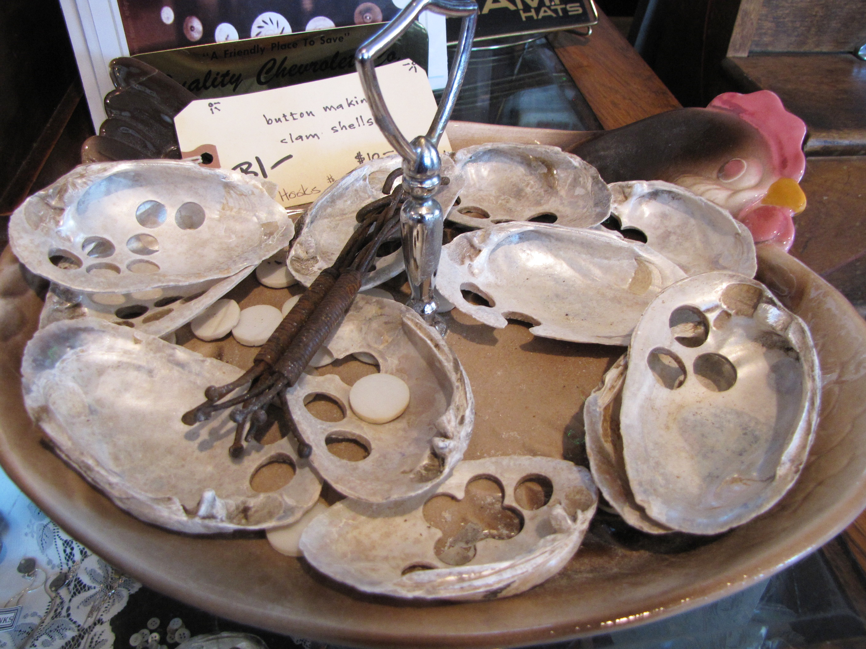 Pearly clams were once cut into buttons.