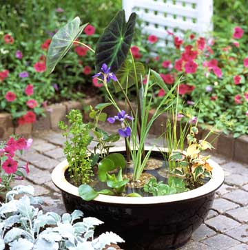 you can pick from many kinds of water garden plants small plants should be potted in a clay type potting mix not a commercial potting soil - Water Garden Plants