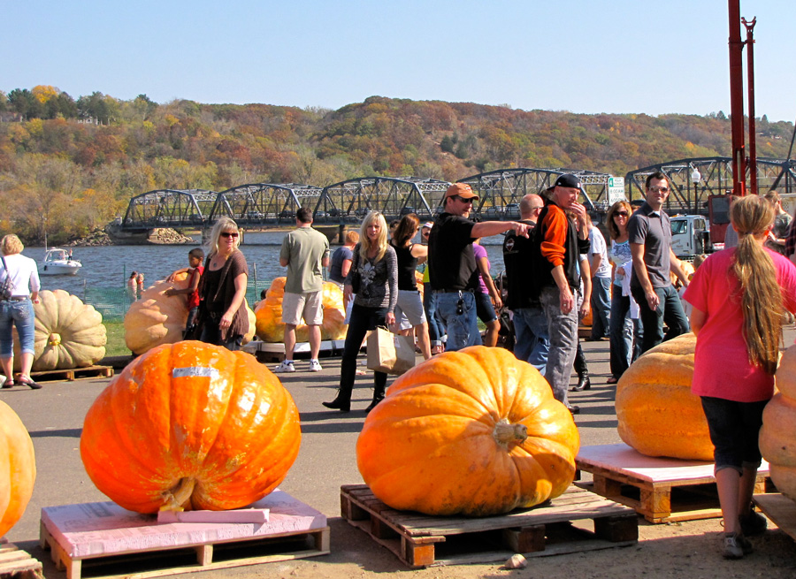 See Supersized Pumpkins