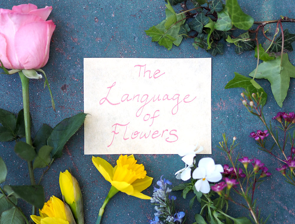 Today, few know the meanings of flowers—but the obscurity is part of the charm if you'd like to assemble a bouquet with a special message.