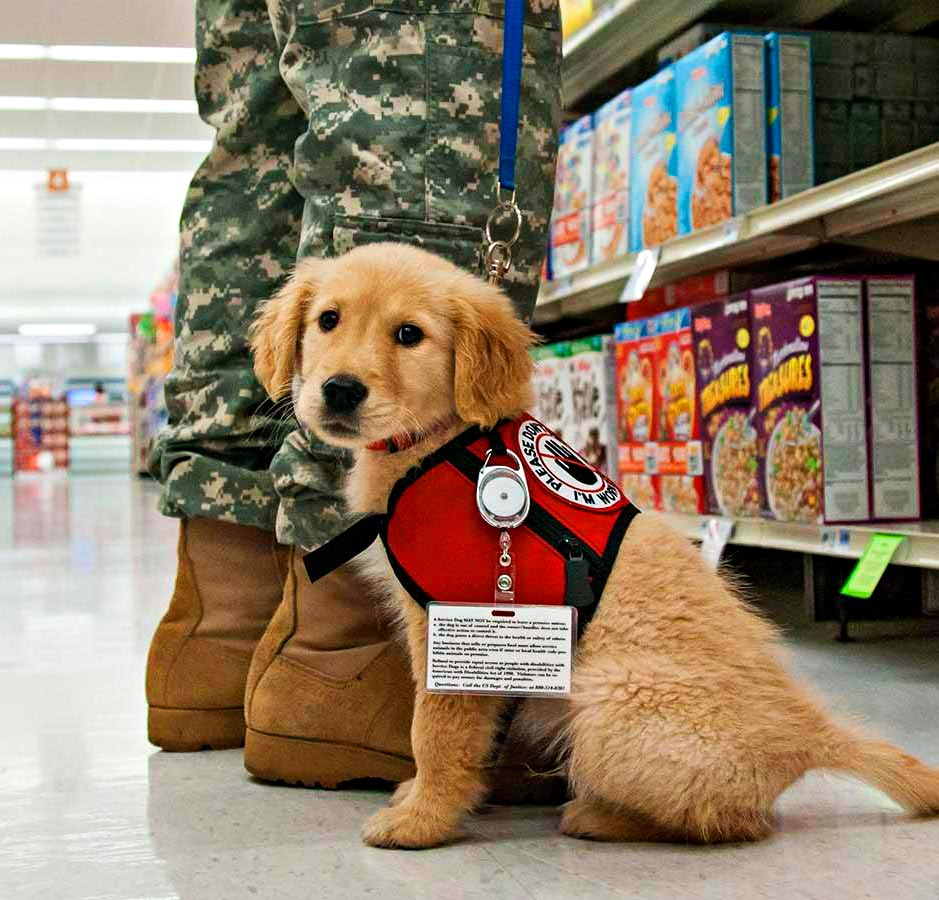 Puppy Jake Foundation