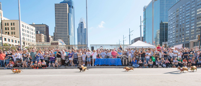 Wiener-dog races