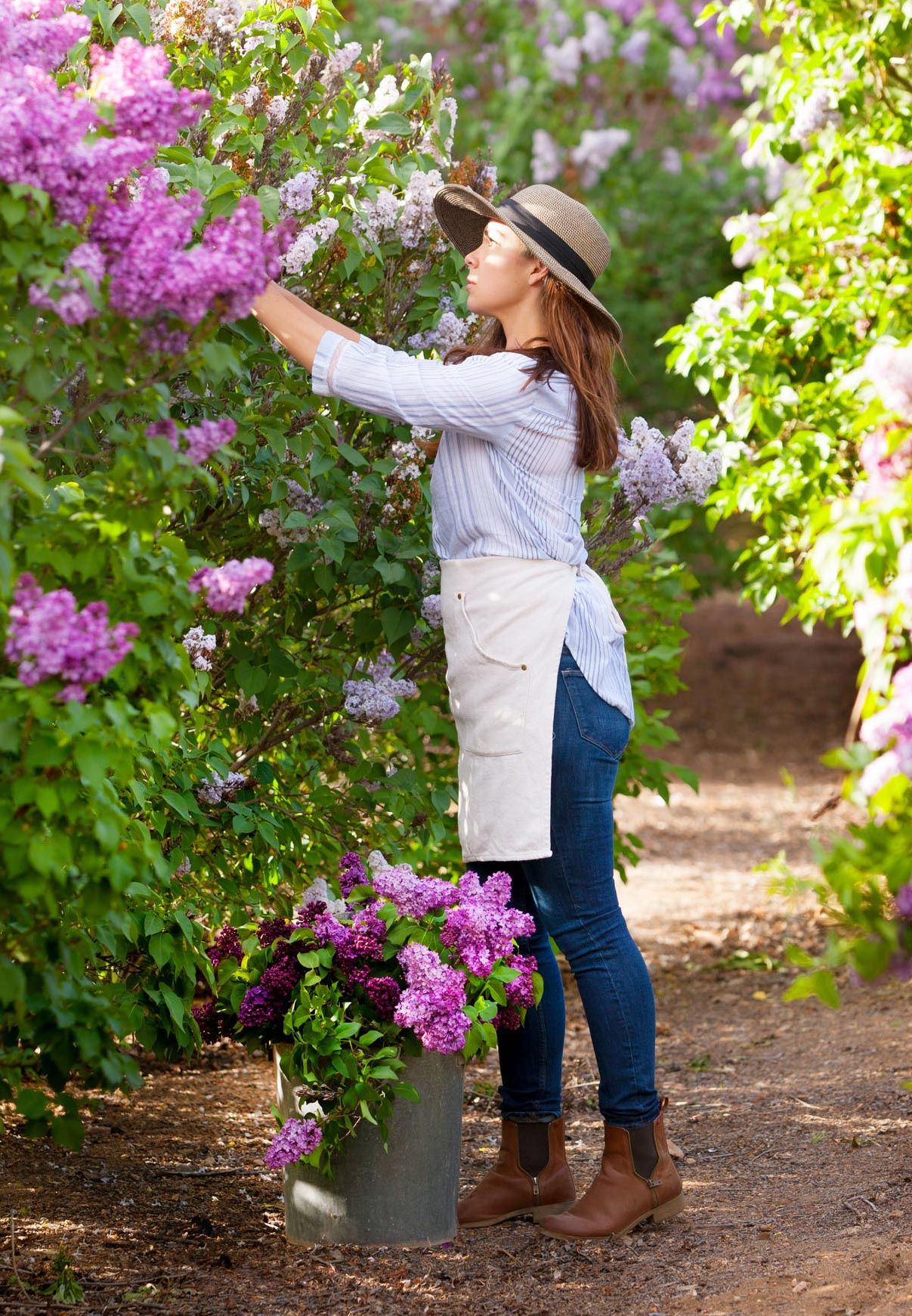 Now Lilacs Are Blooming In March >> The Midwest Lilac Almanac Midwest Living