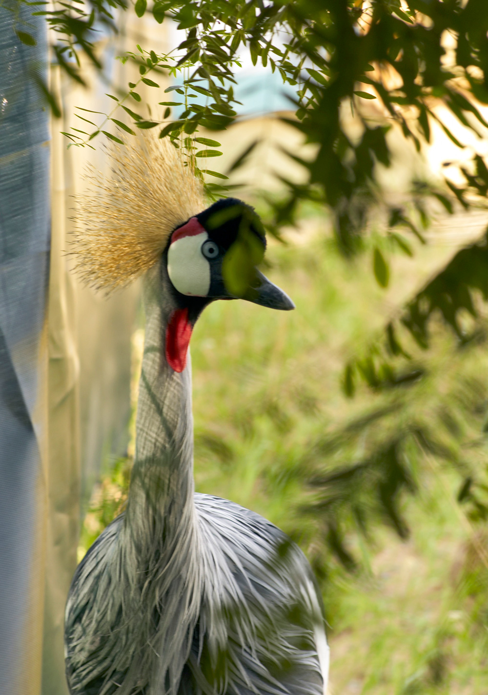 Things to do in the Wisconsin Dells-International Crane Foundation