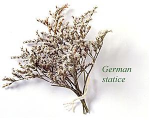 German statice