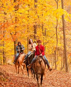 Take a trail ride in Brown County.