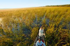 On a good day, a pair of experienced Ojibwe ricers will fill their canoe with as much as 400 pounds of wild rice.
