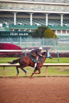 A horse and jockey at Churchill Downs.
