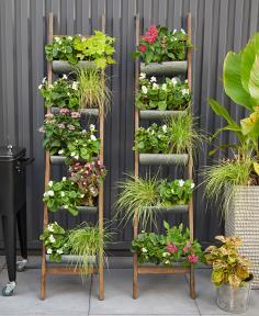 Ladder planters