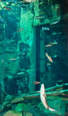 Great Lakes Aquarium
