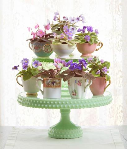 How To Grow African Violet Plants Midwest Living