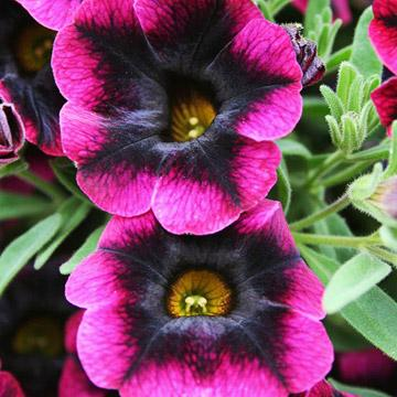 5 Cool New Midwest Plants Midwest Living