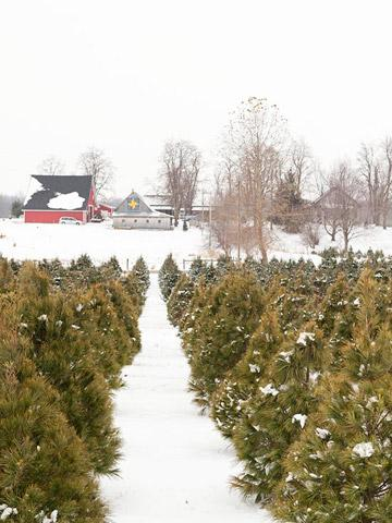 8 Christmas Tree Farms We Love - 8 Christmas Tree Farms We Love Midwest Living
