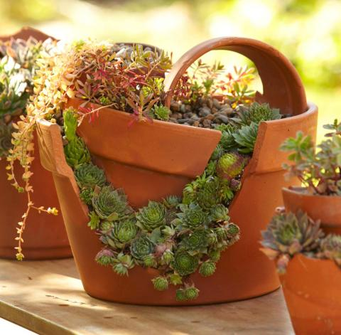 How To Plant A Cracked Pot Succulent Garden Midwest Living