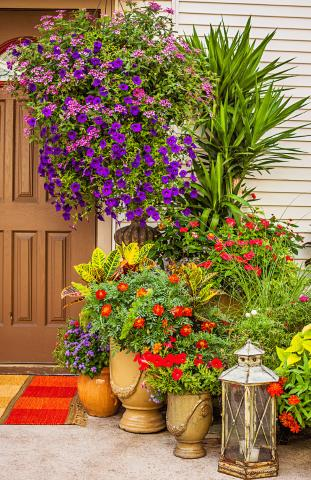 Container Gardens With Pizzazz Midwest Living