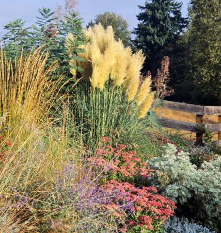 Best ornamental grasses for midwest gardens midwest living for Tall grass garden