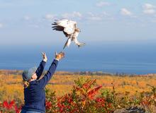 Hawk Ridge Bird Observatory