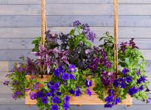Purple state window box
