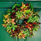 Any-Season Wreath