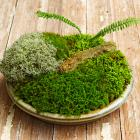 How To Make a Moss Dish Garden
