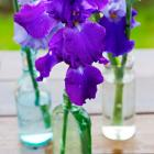 How to Divide Iris