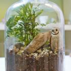 How to Make a Twig Terrarium