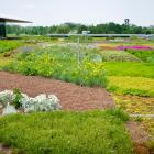 Chicago Botanic Garden green roof