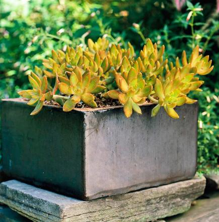 So Easy Succulent Container Gardens Midwest Living