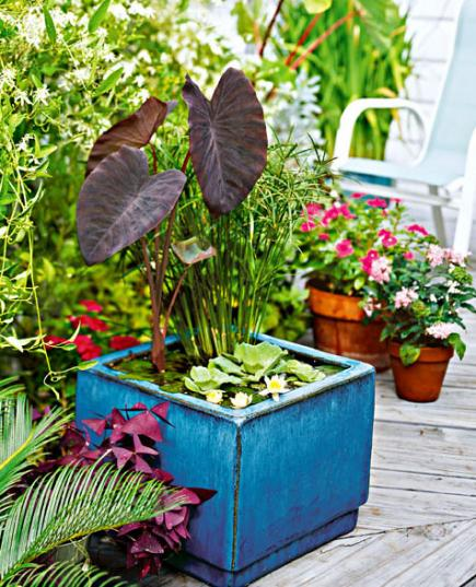 Easy Container Water Gardens Midwest Living