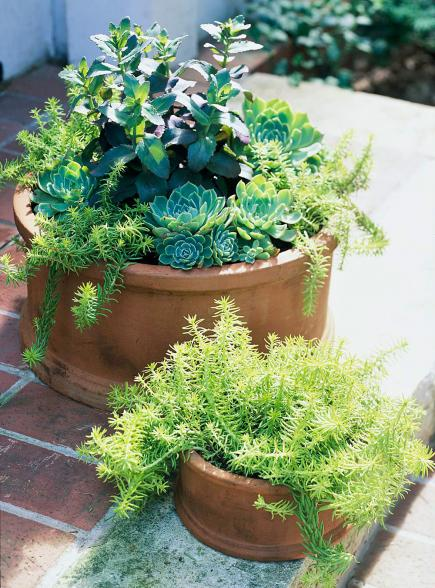 Three plant pots midwest living - Container gardens for sun ...