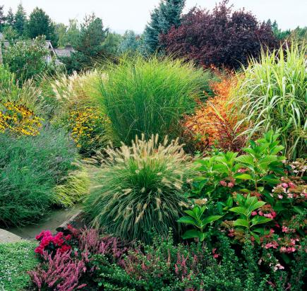 How to use ornamental grasses in midwest gardens midwest for Ornamental grass bed design