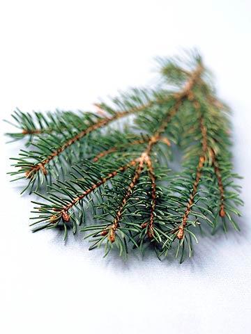 9 favorite christmas trees - White Spruce Christmas Tree
