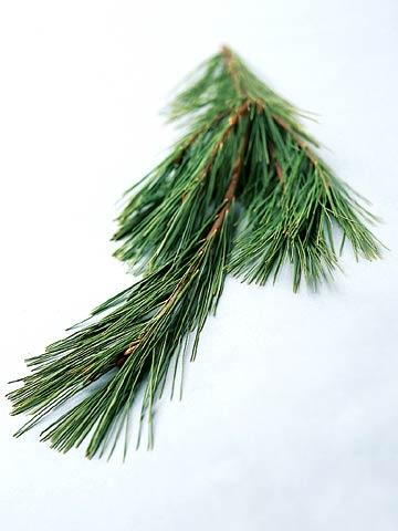 Allergies To Christmas Trees