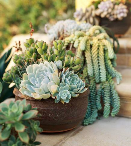 So easy succulent container gardens midwest living workwithnaturefo